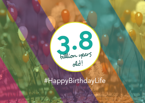lifes_birthday_2016_email_banner
