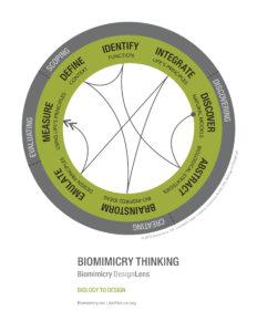 designlens_biology_to_design_web