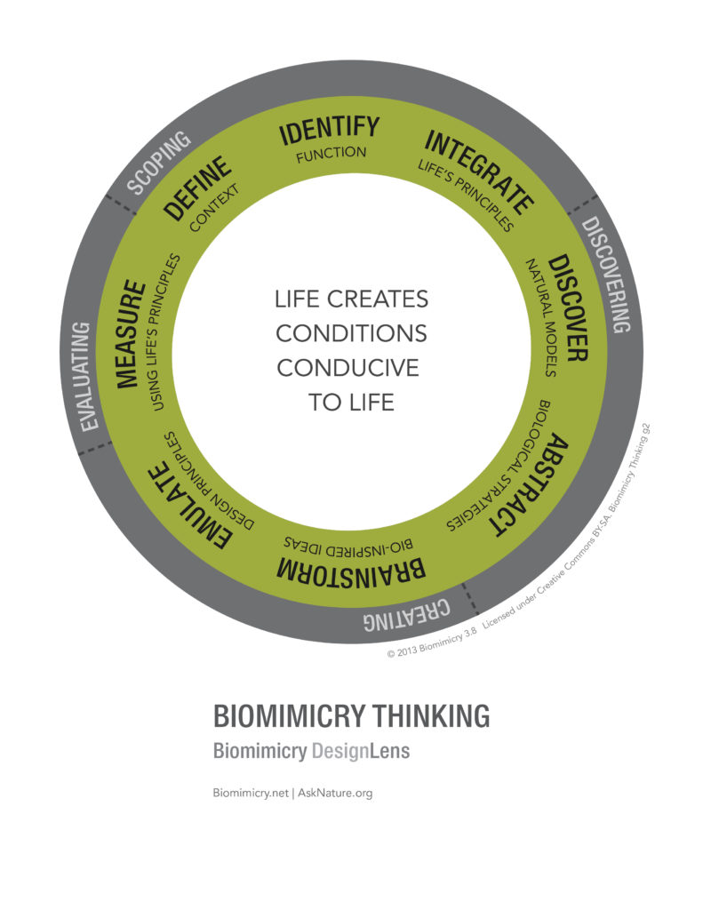 designlens_biomimicry_thinking_web