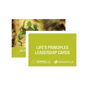 lp-leadership-cards