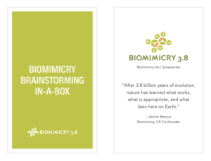 The Biomimicry Innovation Toolkit is designed to help facilitate a creative exploration into sustainable packaging design solutions